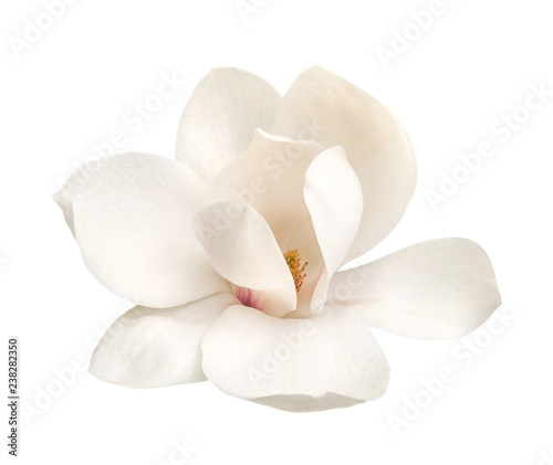 Fotobehang Magnolia tender white magnolia flower isolated