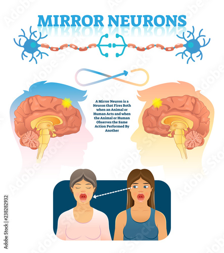 Fotomural Mirror neurons vector illustration