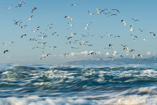 Blue Sea And Blue Sky With Flock Of Birds, Californian Beach, Guadalupe Dunes National Wildlife Reserve