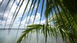 Palmtree in Bacalar lagoon