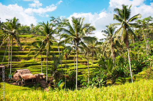 Foto op Plexiglas Asia land Tegallalang Rice Terraces. Ubud, Bali, Indonesia. Beautiful green rice fields, natural background. Travel concept, famous places of Bali.