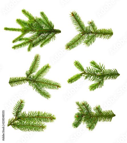 Set of fir branches.