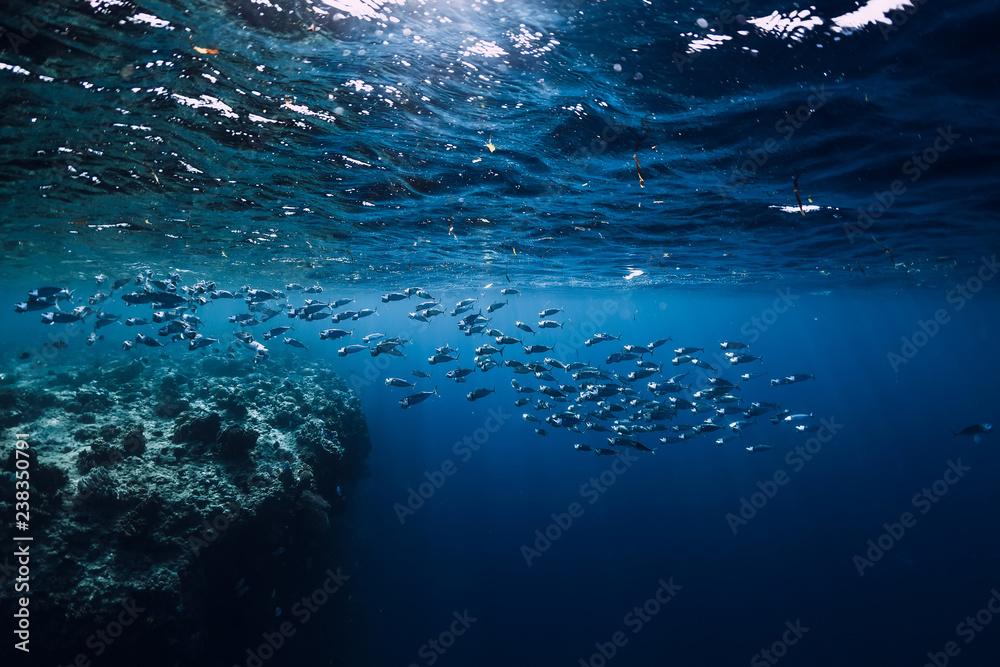 Fototapeta Underwater wildlife with school tuna fish in ocean at coral reef