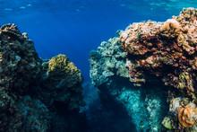 Underwater Rocks With Corals I...