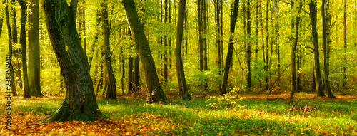 Foto op Canvas Bos Natural Forest in Early Autumn Touched by the Warm Light of the Morning Sun