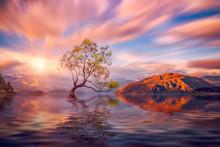 That Wanaka Tree At Sunset Wanaka, NEW ZEALAND