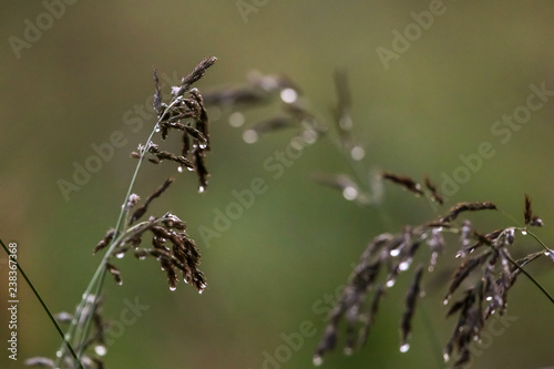 Fotografía  Bent with rain drops on green background.