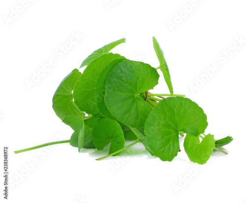 gotu kola leaf on white background