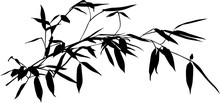 One Black Long Bamboo Isolated Branch