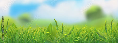 Spring landscape. Green grass vector illustration