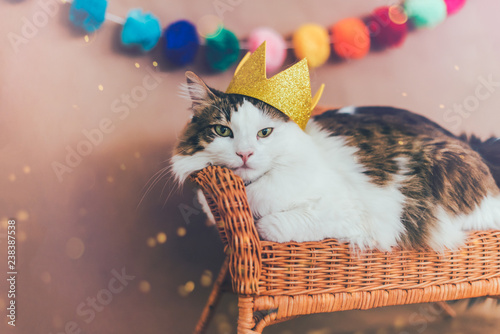 cat wearing crown