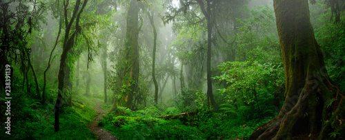 Fototapeta Deep tropical jungles of Southeast Asia in august obraz
