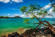 lava shoreline with tree