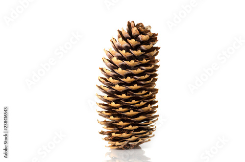 Fotografía  Pine cone on white background.Isolated object.