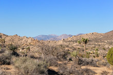 Desert Vista With Distant Mountains And Joshua Trees