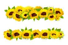 Vector Sunflower Seeds Frame