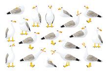 Vector Seagull Sea Gull Set