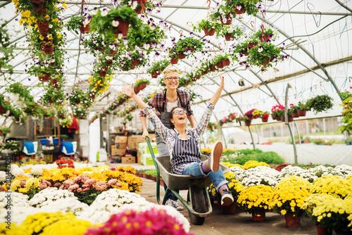 Fotografia Two female florists having fun in greenhouse