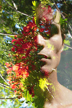 Double Exposure Portrait Of A Young Man With Strong Features Blended With A Bright Red Flowering Tree, Showing The Beauty Behind Strength