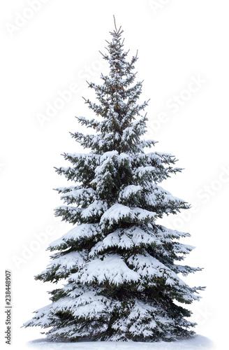 Christmas tree in snow