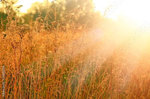 Fotobehang Natuur Grass in sepia in sun glare. Sunny rays illuminate grass in meadow