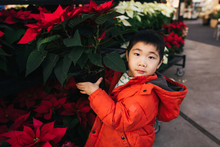 Young Boy Holding Poinsettia Plant