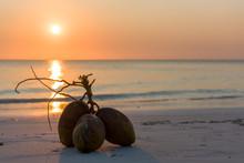 Coconuts On The Zanzibar Beah During Sunset