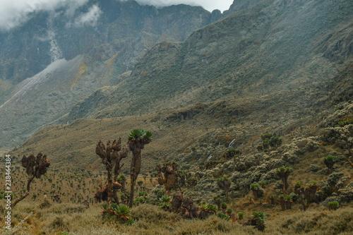 Recess Fitting Green blue Mountain landscapes at Bujuku Valley, Rwenzori Mountains, Uganda