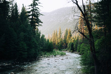 River Flowing Amidst Trees In Forest Against Mountains At Kings Canyon National Park