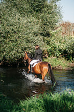 Rear View Of Female Rider Riding Horse In Lake At Forest