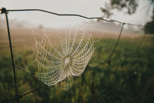 Close-up Of Spider Web Hanging...