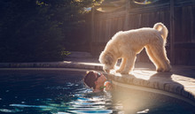 Boy Looking At Dog While Swimming In Pool During Sunset