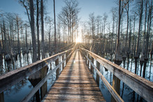Wooden Footbridge Over Swamp Amidst Trees At Pine Log State Forest During Sunset