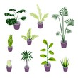 Set of vector isometric potted plants illustrations for indoor design illustrations