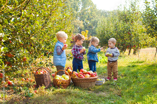Group of small kids eating apples at the tree orchard Slika na platnu