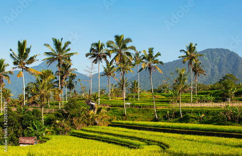 Foto op Plexiglas Asia land Rice terraces and blue sky, Ubud, Bali, Indonesia. Beautiful green young rice fields, natural tropical background. Rice farm, field, paddy. Travel concept.
