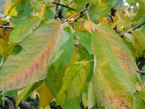 Fényképezés  foglie in autunno
