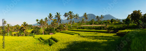 Poster Asia land Panoramic view of Rice Terraces and blue sky, Ubud, Bali, Indonesia. Beautiful green young rice fields, natural beautiful tropical background. Rice farm, field, paddy. Travel concept.