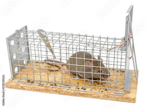 Fotografie, Obraz  Little mouse sits trapped in a wire trap against blurred background