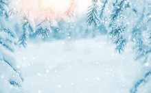 Winter Background. Winter Background With Snow-covered Branches Of  Christmas Tree In The Sunlight