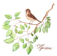 Painted Watercolor Cape Sparrow In A Tree