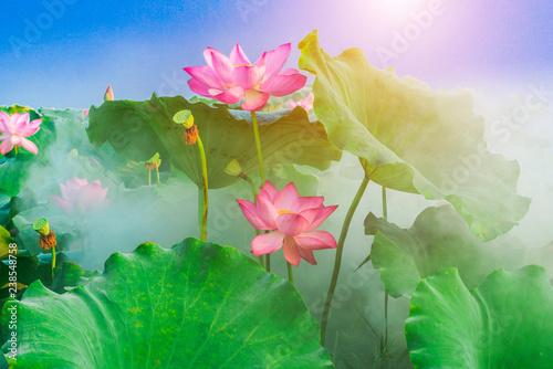 Tuinposter Lotusbloem lotus flower blossom