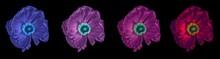 Floral Fine Art Still Life Det...