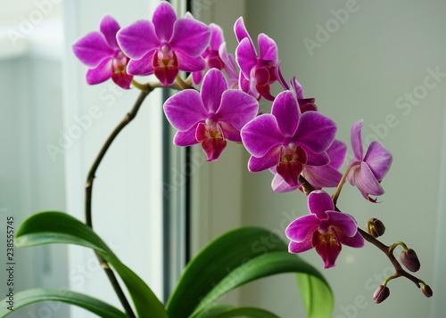 orchid flower on windowsill, closeup