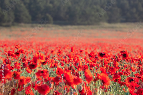 Fotobehang Cultuur Field of poppies