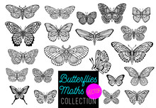 Butterflies Drawing Vector Set, Isolated, Sketch Style Collection Insert Wings Emblem Symbols, Black, White Background. Hand Drawn Vector Illustration.