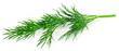 Leinwandbild Motiv fresh green dill isolated on white background. macro