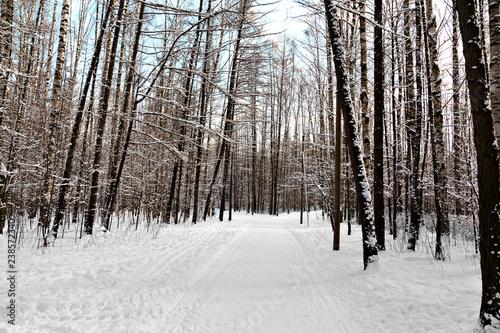 Tuinposter Berkbosje Winter alley in the park
