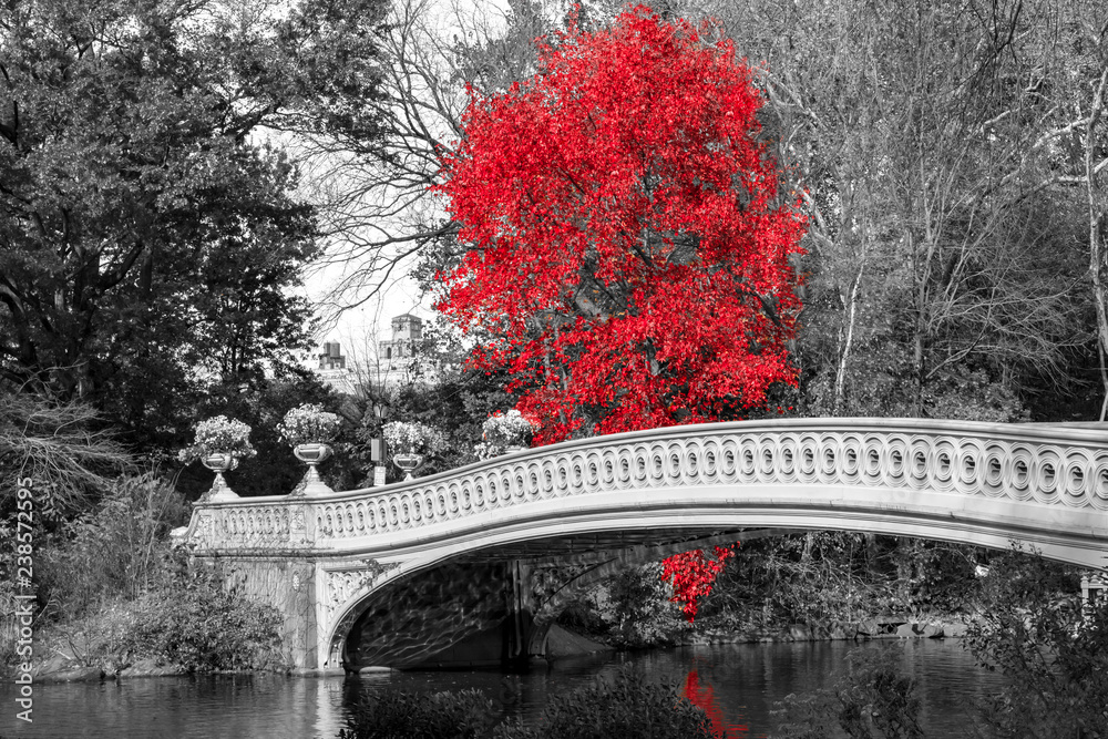 Fototapeta Red tree at Bow Bridge in Central Park fall landscape scene in New York City