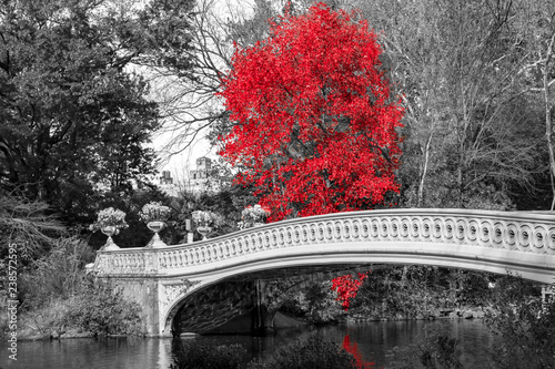Poster Gris Red tree at Bow Bridge in Central Park fall landscape scene in New York City